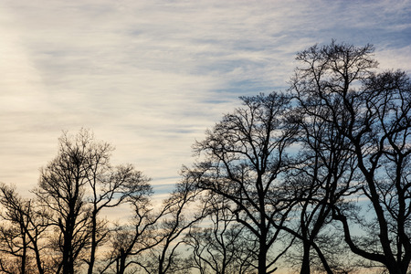 Winter treetops and sunset. Outdoors theme.