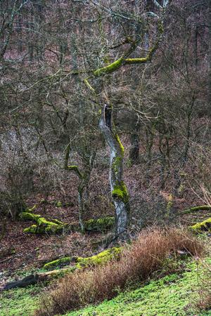 composition vertical: Foresta decidua europea. Composizione verticale.