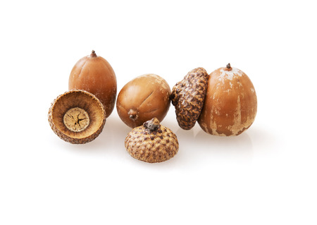 fallen fruit: Acorns on the white background. The acorn, or oak nut, is the nut of the oaks and their close relatives (genera Quercus and Lithocarpus, in the family Fagaceae). Studio photo.