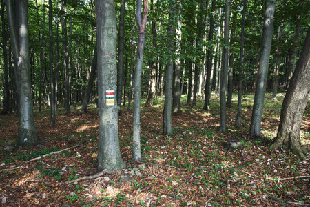 deciduous forest: Tourist signs in the deciduous forest. Hiking theme. Stock Photo