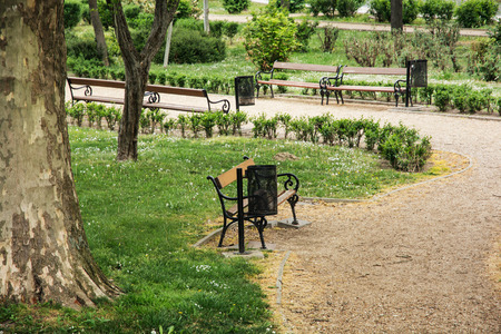 City park with benches and sycamore tree. Rest area. Stock Photo