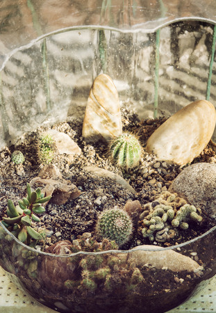 glass bowl: Various cacti planted in the glass bowl. Gardening theme.