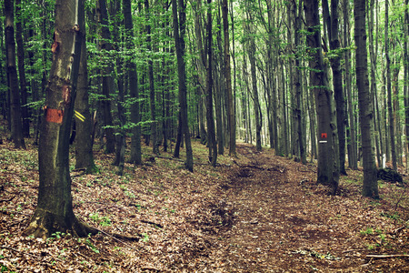 deciduous forest: European deciduous forest. Footpath in mountains. Hiking theme.