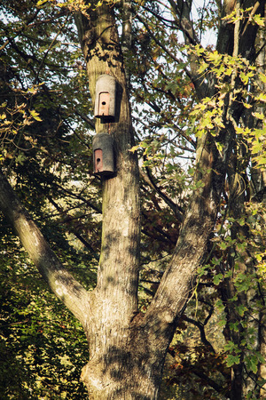 countrylife: Two birdhouses hanging on the tree. Natural theme.