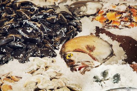 a place of life: Fish on the ice. Market place. Marine life. Stock Photo