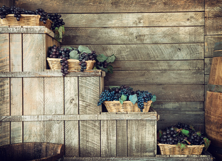 Various grapes in wicker baskets. Harvesting theme. Retro photo.