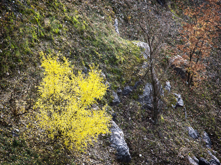 autumn trees: Colorful autumn trees and rocks. Seasonal theme. View from above. Stock Photo