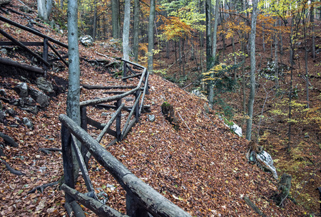 hiking path: Hiking path in the autumn deciduous forest. Seasonal natural scene. Tourism theme.
