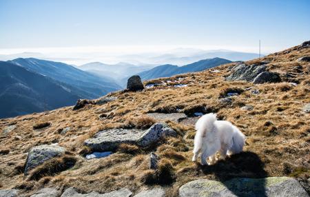 mountainy: White dog and Low Tatras mountains. Hiking theme. Seasonal natural scene.