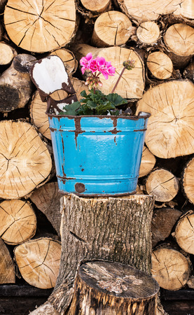 flowerpot: Pelargonium flower planted in the blue flowerpot with chopped wood in the background. Rural still life.