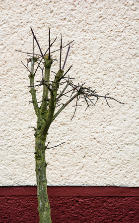 vertical composition: Dried tree in front of the house wall. Vertical composition. Stock Photo
