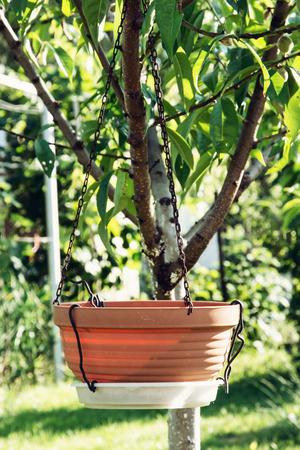 flowerpot: Empty ceramic flowerpot is hanging on the tree. Gardening theme. Vertical composition.
