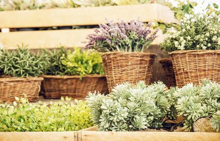flower market: Mix of various plants in wicker pots. Gardening theme. Stock Photo