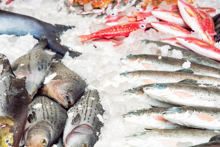 a place of life: Various fish on the ice. Market place. Marine life.
