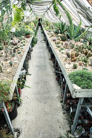 Inter Von Gewachshaus Fur Den Anbau Von Blumen Pflanzen Und Kakteen