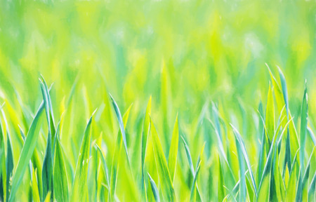 corn field: Green corn field in spring. Seasonal agricultural theme. Beauty in nature. Illustration with colored pencils.