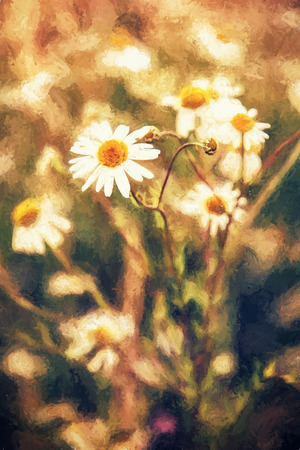 lighting technique: Beautiful daisy flowers in meadow by sunset. Seasonal natural scene. Photo filter. Illustration with colored pencils. Stock Photo