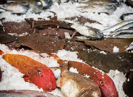 raw fish: Various raw fish on the ice. Sea marketplace. Marine life. Stock Photo