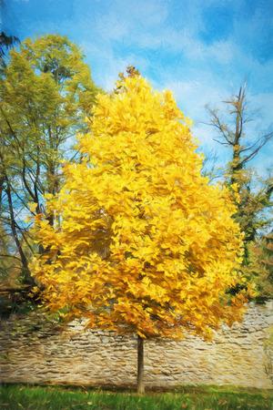 autumn scene: Big orange tree and blue sky. Autumn scene. Colorful november. Seasonal natural scene. Illustration with colored pencils.