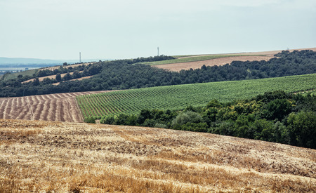 cultivated land: Fields and forests. Cultivated land. Agricultural landscape. Stock Photo