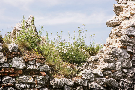 Ruined Plavecky castle, Slovak republic. Close up of wall with flowers.