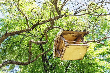 the ornithology: Wooden bird house hanging on the green tree. Seasonal natural scene. Beauty in nature. Ornithology theme. View from the bottom up.