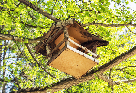 the ornithology: Wooden bird house hanging on the green tree. Seasonal natural scene. Beauty in nature. Ornithology theme. Detailed natural scene. View from the bottom up. Stock Photo
