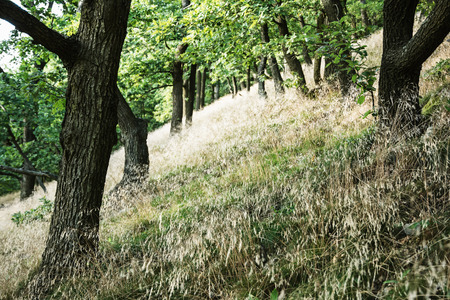 deciduous forest: Deciduous forest in summer. Seasonal natural scene. Hiking theme. Stock Photo