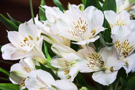 stigma: Festive bouquet of beautiful white hibiscus flowers. Big petals and pistil. Beauty in nature. Wedding bouquet. Natural decoration. Closeup scene. Hibiscus stigma. Stock Photo