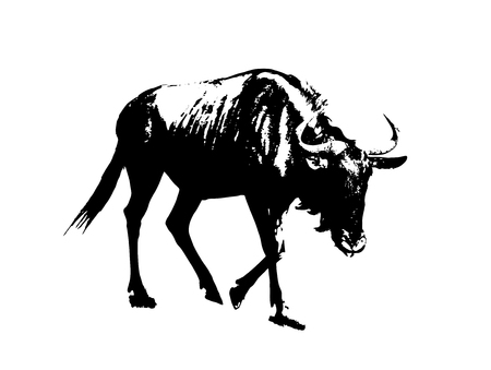 Blue wildebeest - Connochaetes taurinus. Black and white graphic. Antelope in picture. Animal scene.