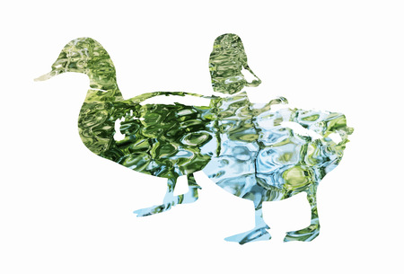 Silhouette of two mallard ducks filled with rippled water surface. Natural theme. Ducks stencil. Birds theme. Cutout stencil animal. Blue and green reflections. Ilustração