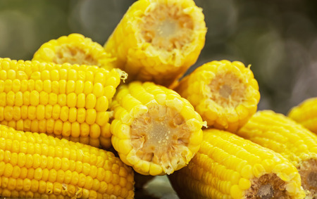 sweetcorn: Corn on the cob. Seasonal sweet food. Fruit and vegetable. Sweetcorn scene. Vibrant colors.