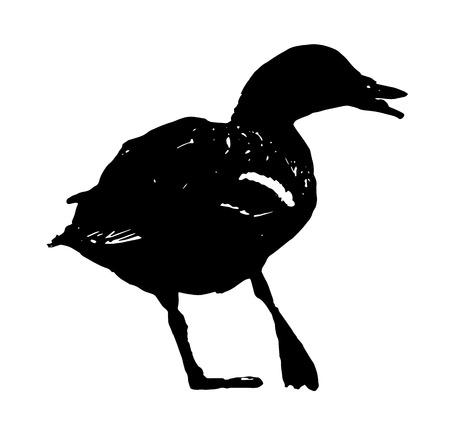 drake: Wild mallard duck with the broken leg. Black and white vector graphic. Animal scene. Drake in picture.