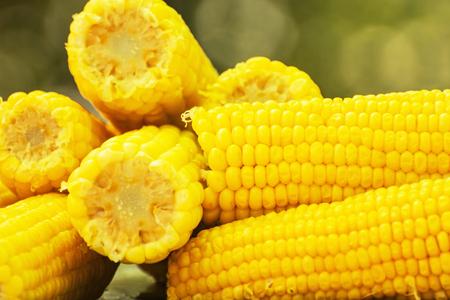 sweetcorn: Yellow corn on the cob. Seasonal sweet food. Fruit and vegetable. Sweetcorn scene. Vibrant colors.