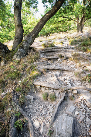 hiking path: Hiking path in the deciduous forest. Natural seasonal scene. Vertical composition. Roots and stony soil.