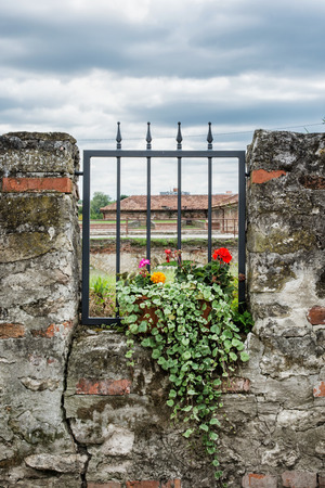 flowering plant: Potted flowering plant and ancient wall with metal grid. Outdoor decoration. Vertical composition.