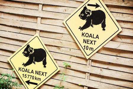 endangered: Information board with the inscription about koala in ZOO. Directional guide sign. Endangered animals species.