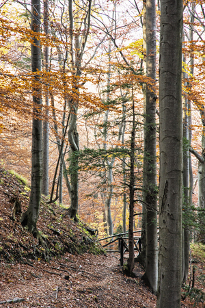 hiking path: Hiking path with railing in the autumn deciduous forest. Seasonal natural scene. Tourism theme. Beautiful place. Vertical composition. Vibrant colors.