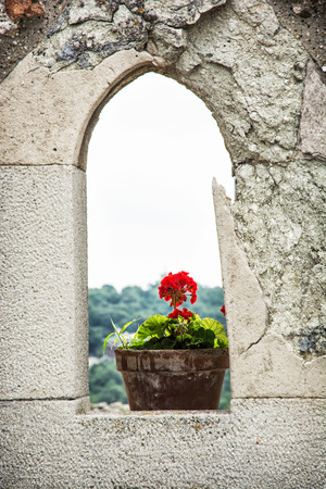 vertical composition: Potted red flower in stone window. Architecture element. Vertical composition. Seasonal scene.