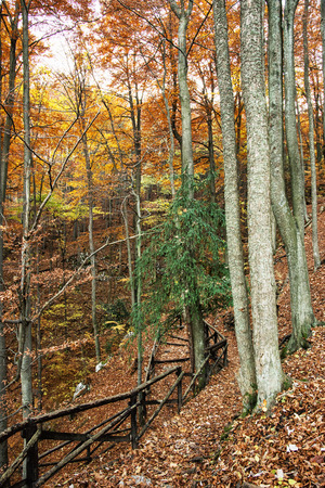 path to romance: Hiking path with railing in the autumn deciduous forest. Seasonal natural scene. Hiking theme. Beautiful place. Vertical composition. Vibrant colors. Stock Photo