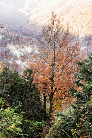changing seasons: Colorful forest in the mountains. Beauty in nature. Vertical composition. Vibrant colors. Seasonal natural scene. Stock Photo