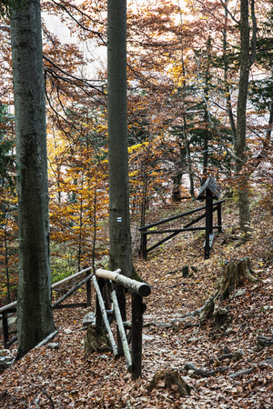hiking path: Hiking path with railing in the autumn deciduous forest. Seasonal natural scene. Beautiful place. Tourist sign. Vertical composition. Tourism theme.