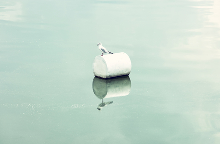 The seagull on the buoy. Natural scene. Blue photo filter. Stock Photo