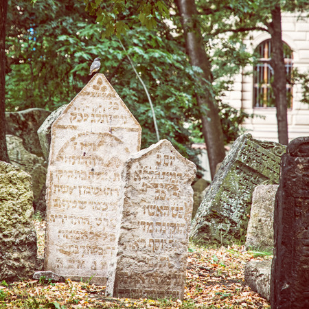 Jewish cemetery in Prague, Czech republic. Many graves. Singing bird is sitting on the tombstone. Beauty photo filter.