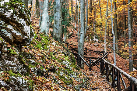 Hiking path with railing in the autumn deciduous forest. Seasonal natural scene. Tourism theme. Vibrant colors. Yellow photo filter.