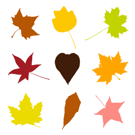 Colorful leaves isolated on white background. Autumn collage. Drawing objects. Stock Photo