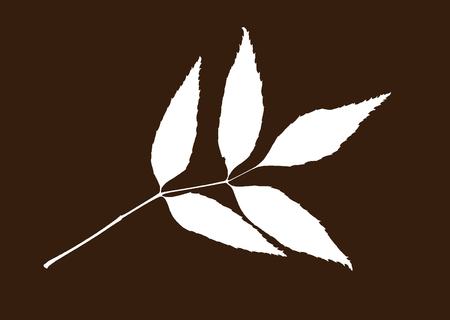 White shape of leaf on the brown background. Symbolic natural object.