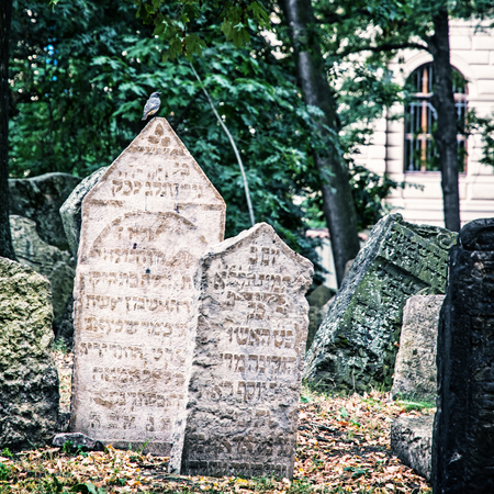 Jewish cemetery in Prague, Czech republic. Many graves. Singing bird is sitting on the tombstone. Blue photo filter.
