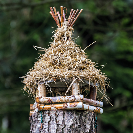 Wooden bird house hanging on the tree stump. Ornithology theme. Seasonal natural scene.