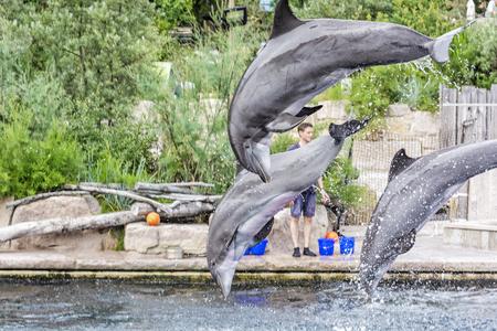 NUREMBERG, GERMANY – JULY 22, 2014: Show of trained dolphins in Nuremberg zoo, Germany. Illustrative editorial. Animal theme. Standard-Bild - 118023696